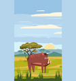 wild boar on background african vector image
