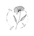 wild flower sketch drawing hand painted ink vector image vector image