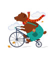 bear riding a bicycle in scarf autumn vector image