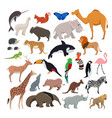 big set with wild cute animals isolate vector image vector image