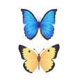 butterflies collection poster vector image