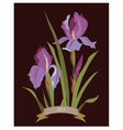 Iris flowers bouquet vector image