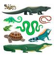 reptiles and amphibians lizard crocodile turtle