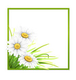 green frame with grass and daisies in corner vector image