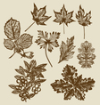 hand drawn leaves vector image