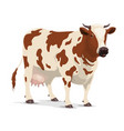 cow farm animal white and brown heifer cattle vector image
