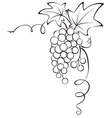 Graphic design - Grapevine vector image vector image