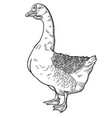 white goose goose hand drawn vector image