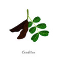 drawing branch carob tree vector image
