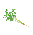 Fresh Green Parsley on A White Background