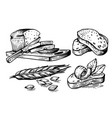 hand drawn sliced bread and wheat with grains vector image