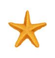 icon of bright orange ocean starfish sea animal vector image vector image