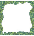 plant border vector image vector image