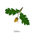 drawing branch oak tree vector image vector image