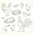 freehand drawing chicken items vector image