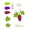 bunch of grapes brushes set vector image