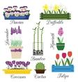 Indoor and Garden Flowers in Pots Set vector image vector image