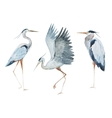 Watercolor heron birds vector image vector image