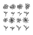 hand drawn sketch of flower part vector image