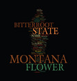 montana state flower text background word cloud vector image vector image