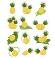 different variants pineapples vector image vector image