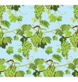 Seamless pattern with green grapes and leaves on vector image