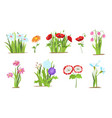 set of wild forest and garden flowers spring vector image vector image