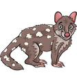tiger quoll animal cartoon vector image vector image