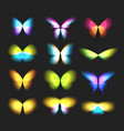 butterfly isolated logos set bright colorfull vector image
