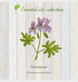 geranium essential oil label aromatic plant vector image vector image