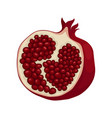 half of ripe pomegranate fruit with sweet juicy vector image vector image