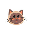head brown kitten isolated cute emoticon cat vector image vector image