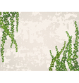 old wall with ivy branch vector image vector image