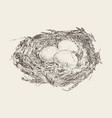 bird nest three eggs hand drawn sketch vector image