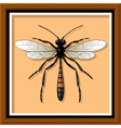 Sand wasp vector image vector image