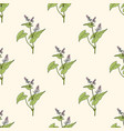seamless pattern with buckwheat edible plant vector image