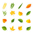 set of colorful leaves vector image