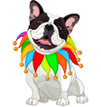 French bulldog wearing a colorful collar vector image