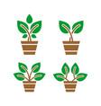 green plant logo design vector image