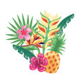 pineapple flowers tropical fruits foliage exotic vector image vector image