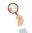 bacteria in magnifying glass vector image