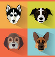 dog portraits with flat design vector image vector image