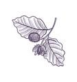 drawing branch beech tree vector image vector image