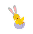 easter chicken with ears vector image vector image