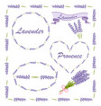 floral elements for logo or decor lavender icons vector image