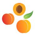 Peach Set vector image vector image