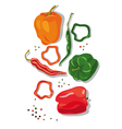 pepper and chillies vector image vector image