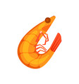 tiger shrimp isolated icon vector image