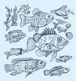 fish sketch set vector image