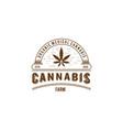 cannabis farm vector image vector image